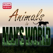 Animals in Man's World